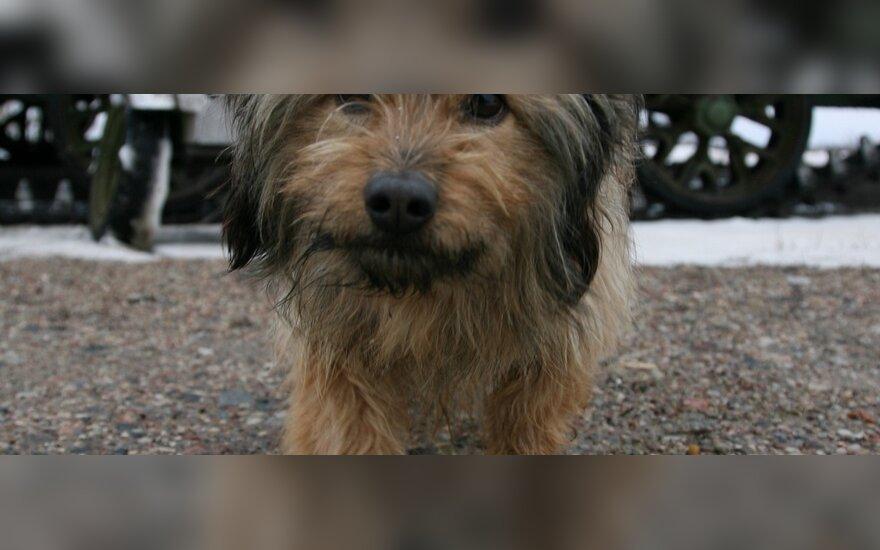 Убийца щенка отделался штрафом