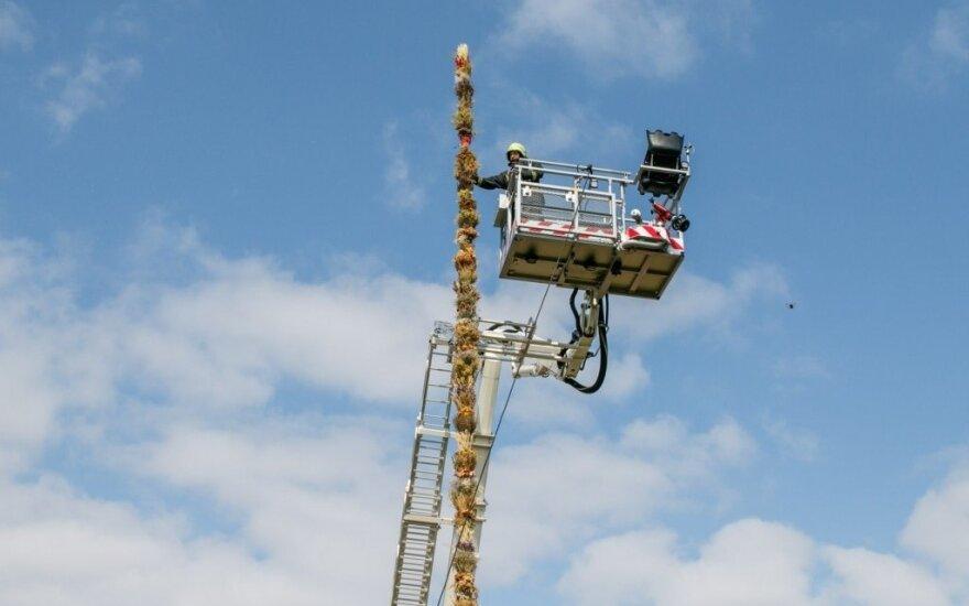 В Каунасе установлен рекорд: появилась самая большая верба