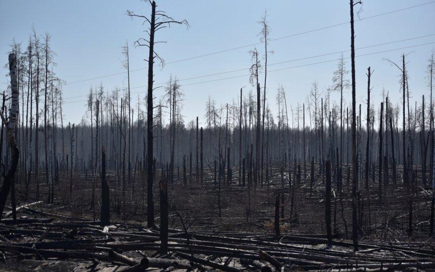 Miškų gaisrai