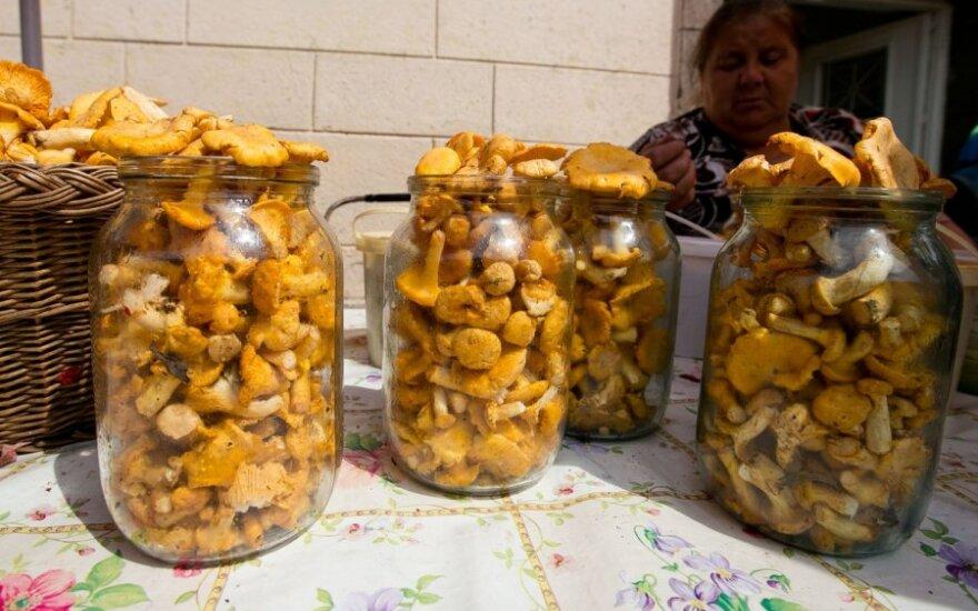 Прогнозируют хороший урожай грибов и ягод