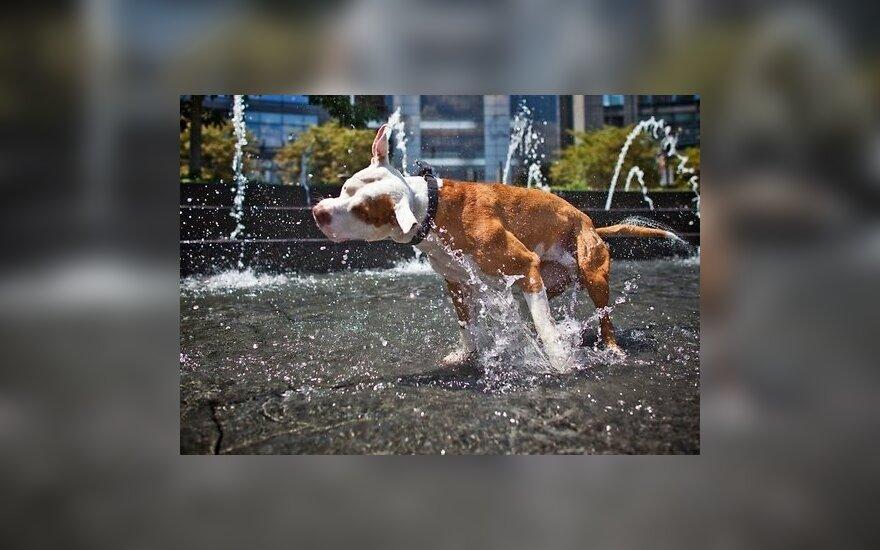 Швейцарская полиция советует собакам носить обувь в жару