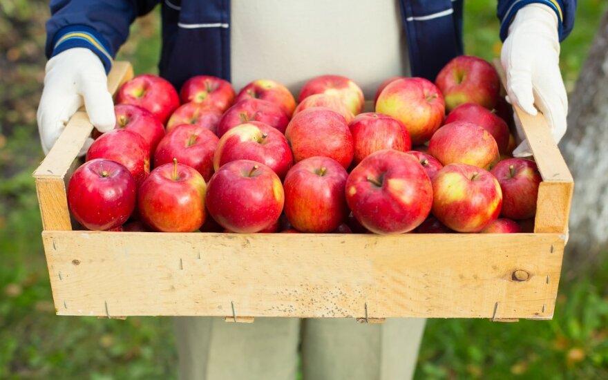 Яблочный уксус – средство от всех бед