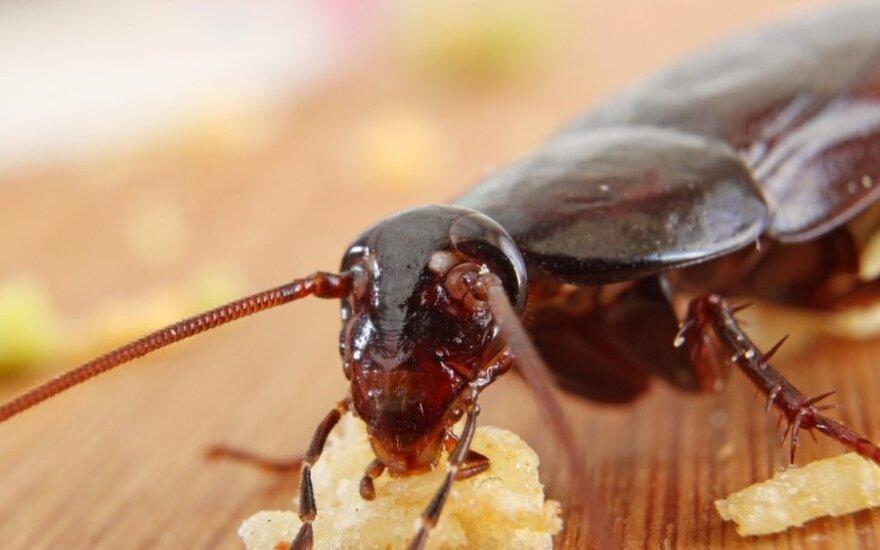 7 причин перейти на диету из насекомых
