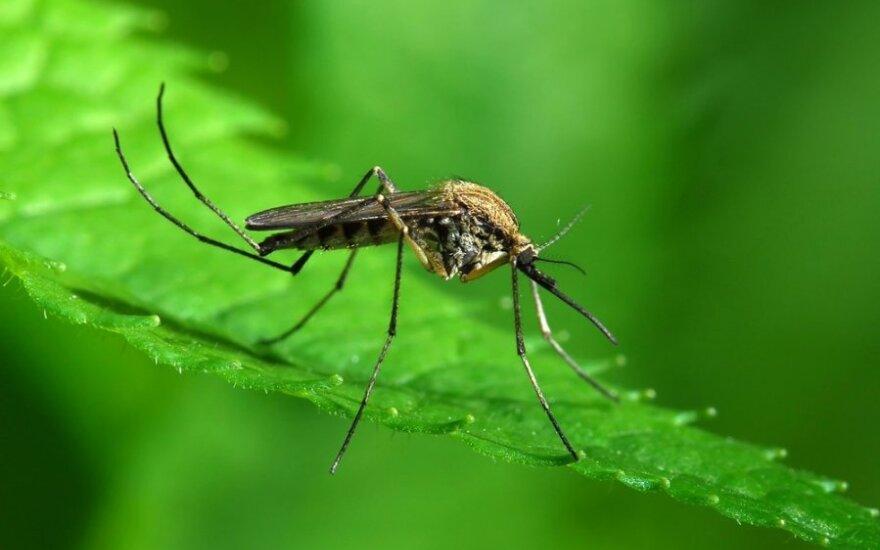 В Клайпеде снова установлен случай заболевания малярией