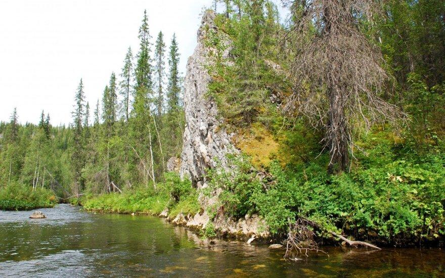 На Урале женщина заблудилась в лесу и месяц выбиралась к людям