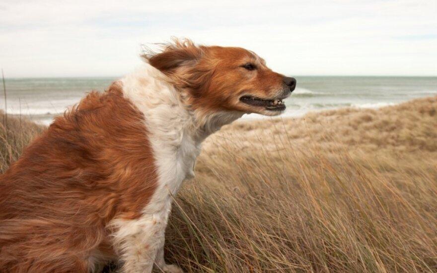 Синоптики предупреждают: ожидается сильный ветер
