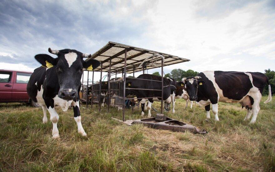 Знаменитый молочник продал коров: надо признать, что мы проиграли полякам
