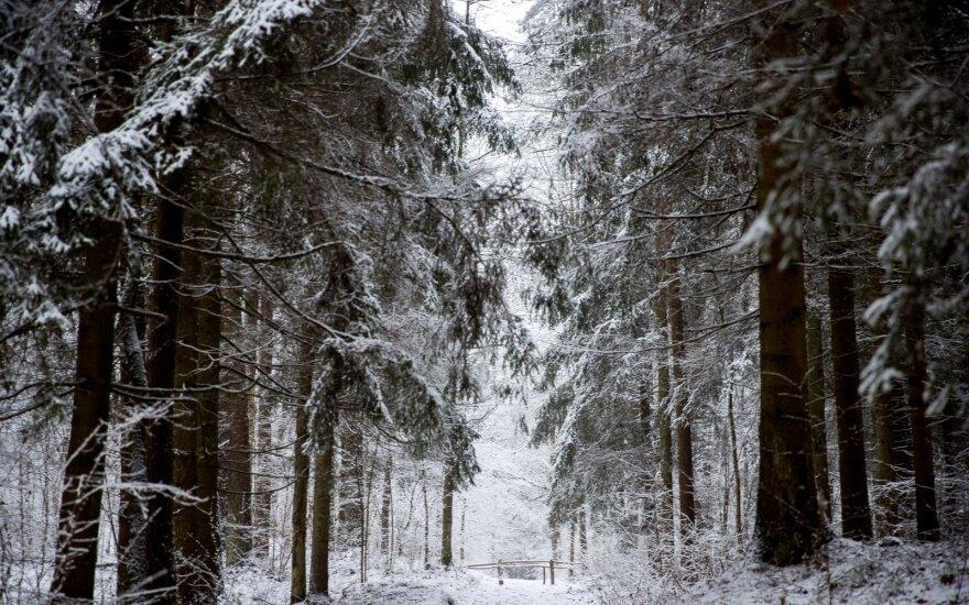 Такой зимы в Литве не было давно: готовьтесь к снегопаду