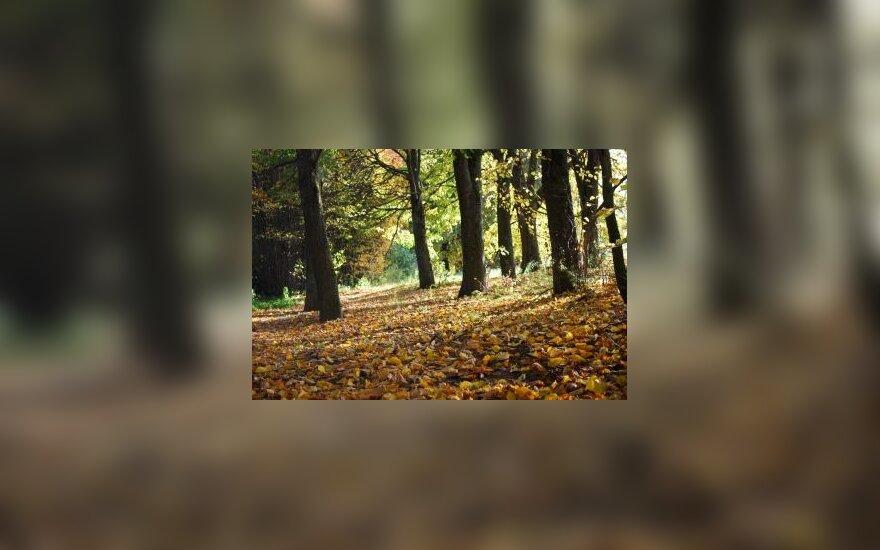 Miškas, ruduo, lapai, medžiai