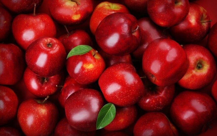 Россия запретит ввоз яблок и груш из Беларуси