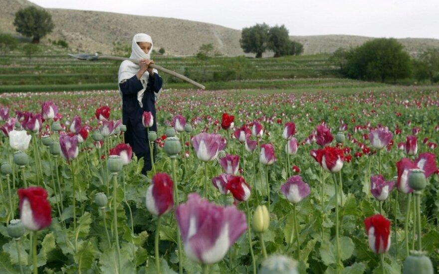 ООН: в Афганистане выращен рекордный урожай мака