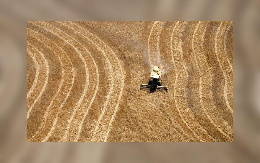 В Литве ожидается урожай зерновых в 5,8 млн. тонн