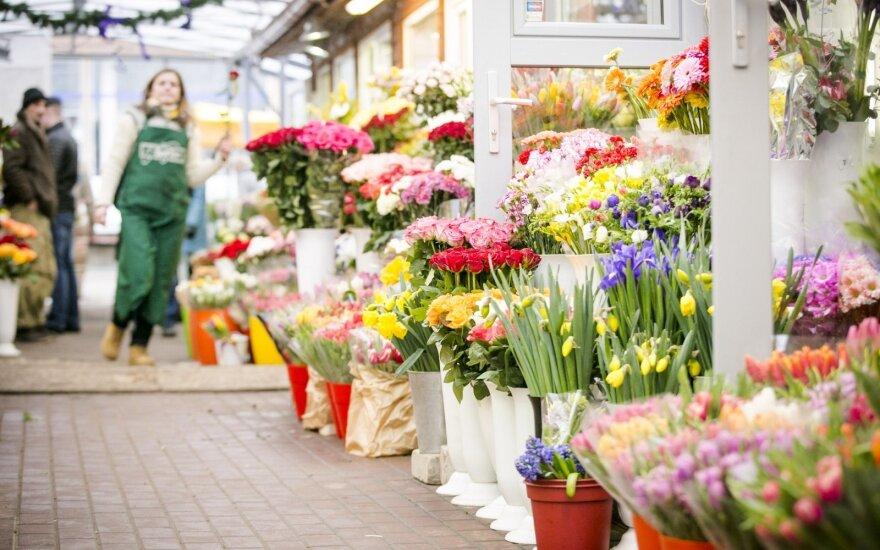 Покупателей возмущают цены на тюльпаны