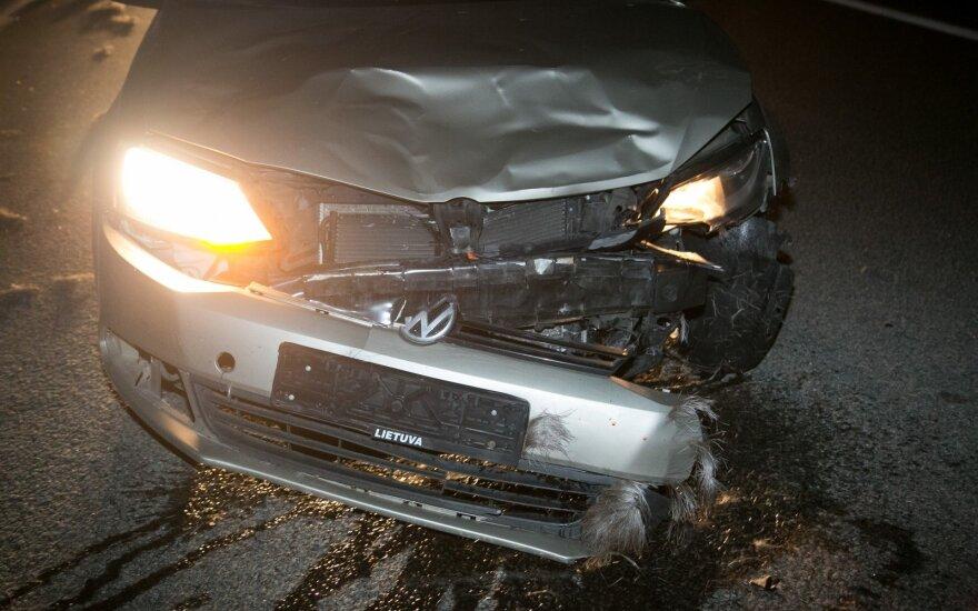 Из-за лося произошло ДТП с участием нескольких автомобилей