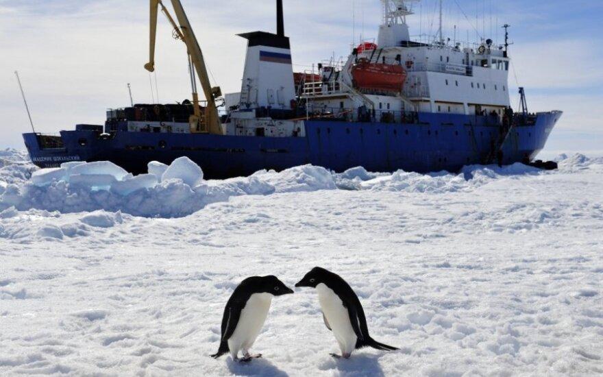 """Du pingvinai žaidžia priešais lede įkalintą ledlaužį """"Akademik Šokalskij"""""""