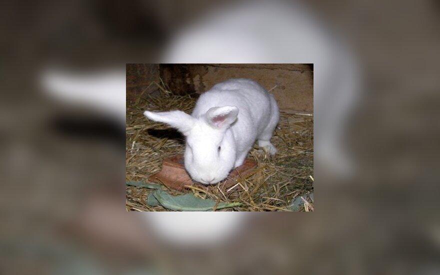 Серьезные травмы получил ловивший кролика мужчина