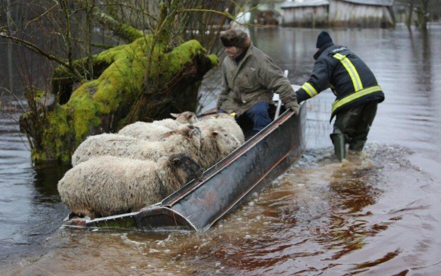 Avių gelbėjimo operacija