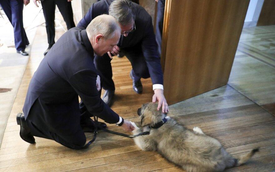 Лидер Сербии подарил Путину щенка шарпланинской овчарки, пополнив его мини-зоопарк