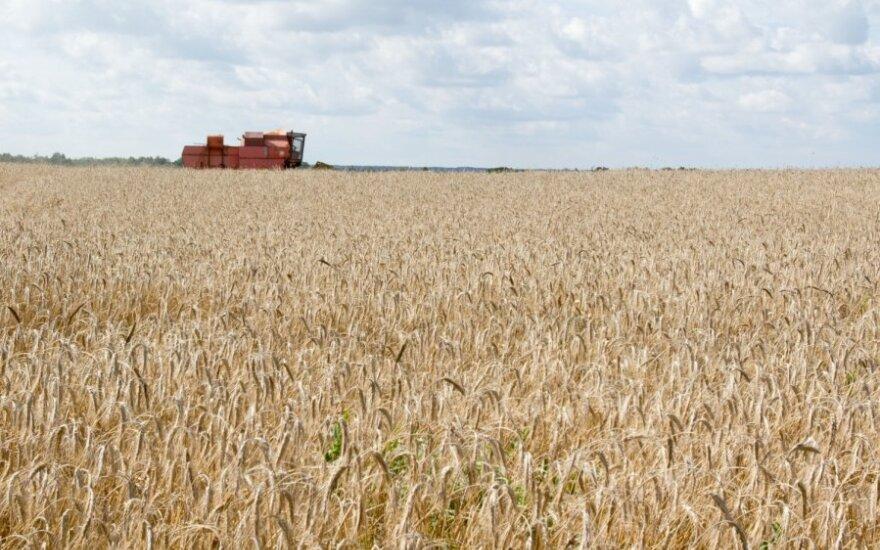 Цены на зерно в России достигли максимума с распада СССР