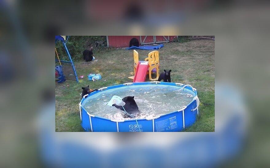 Медведица привела медвежат искупаться в дом с бассейном
