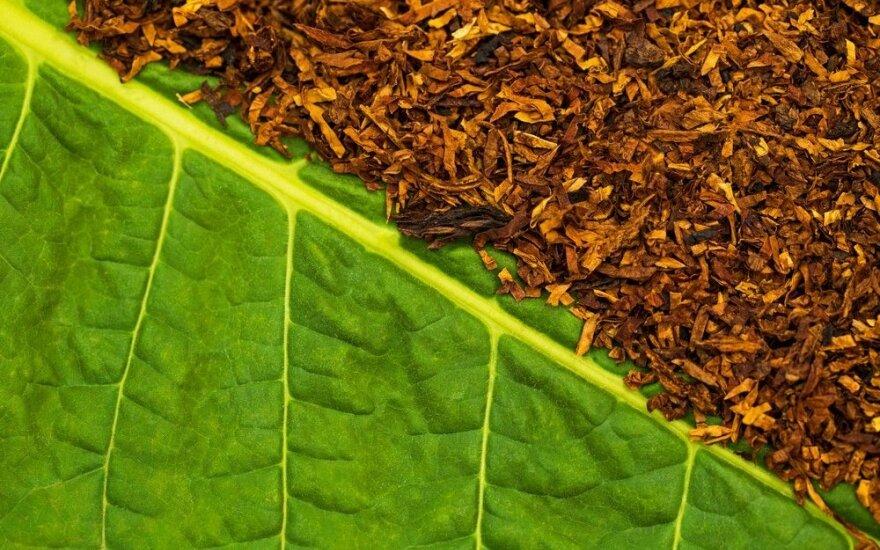 В Литве предлагают ввести акциз на необработанный табак