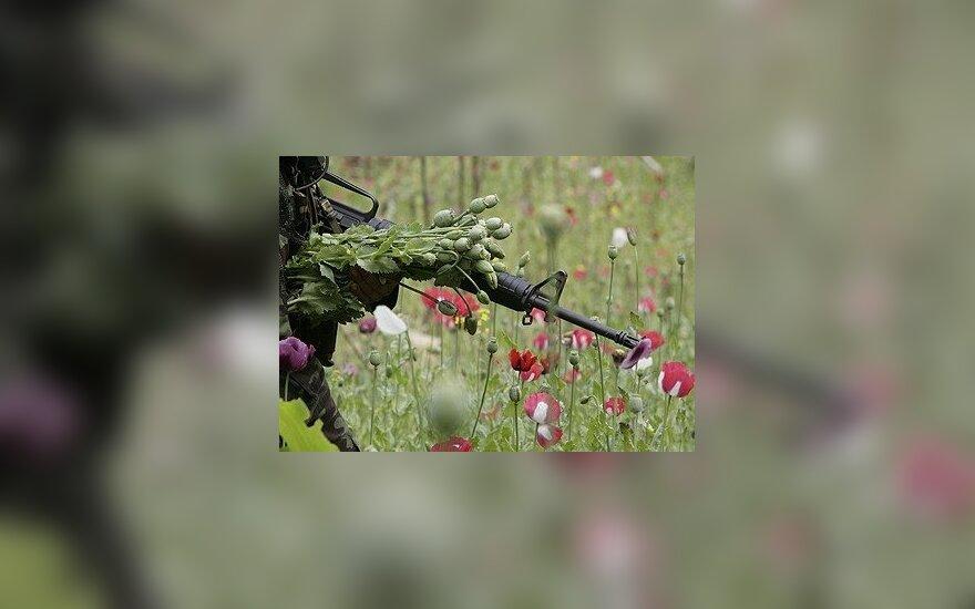 Tailando kareivis per aguonų naikinimo operaciją rauna tinkamas opiumui išgauti augalų galvutes.