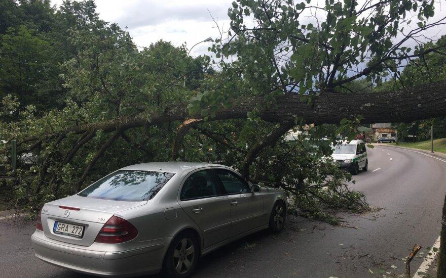 В Вильнюсе на ул. Гележинё Вилко на автомобиль упало дерево