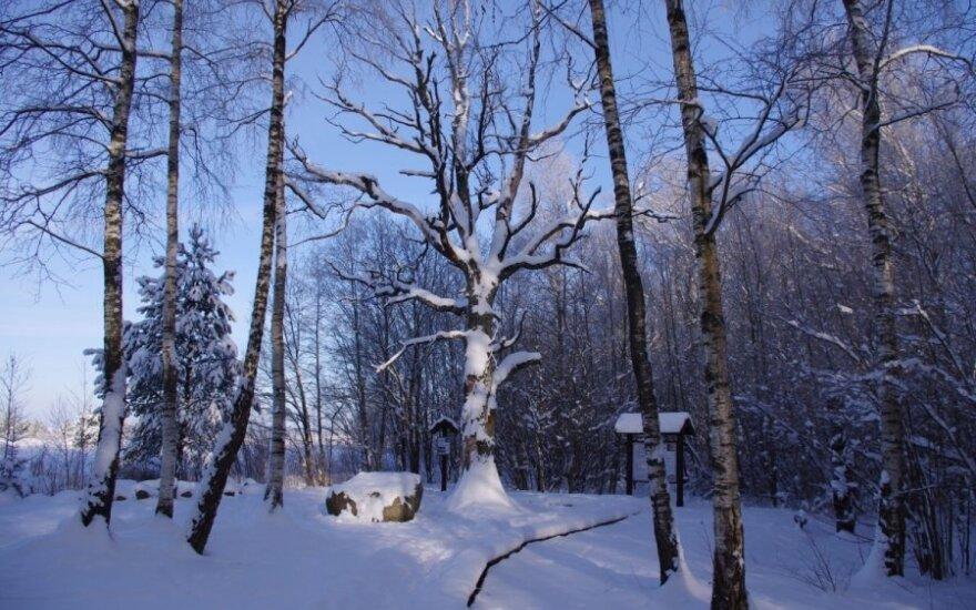 Neries regioninis parkas žiemą. Neries regioninio parko nuotr.