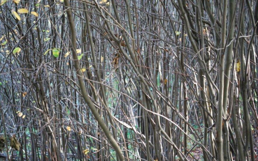 В Пакруойском районе в кустах обнаружены останки мужчины
