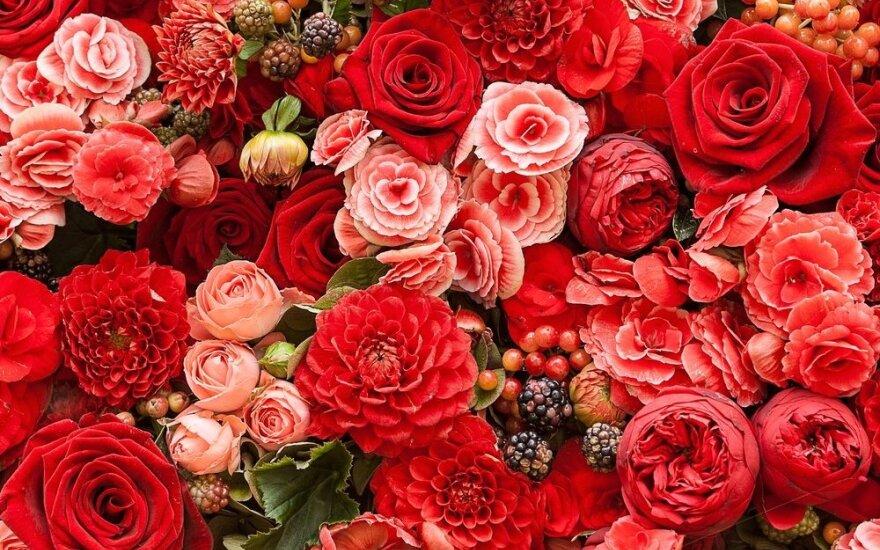 Литва не останавливала сертификацию голландских цветов