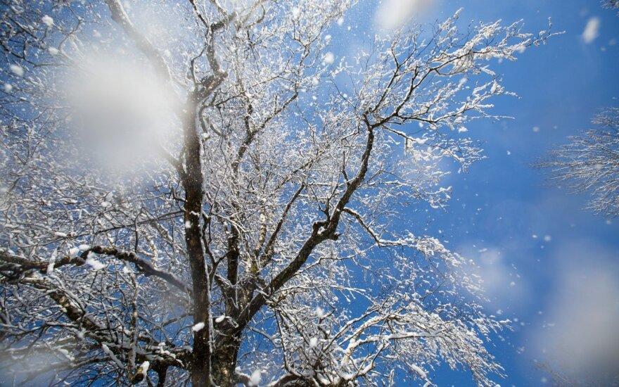 Погода: весну снова сменила зима