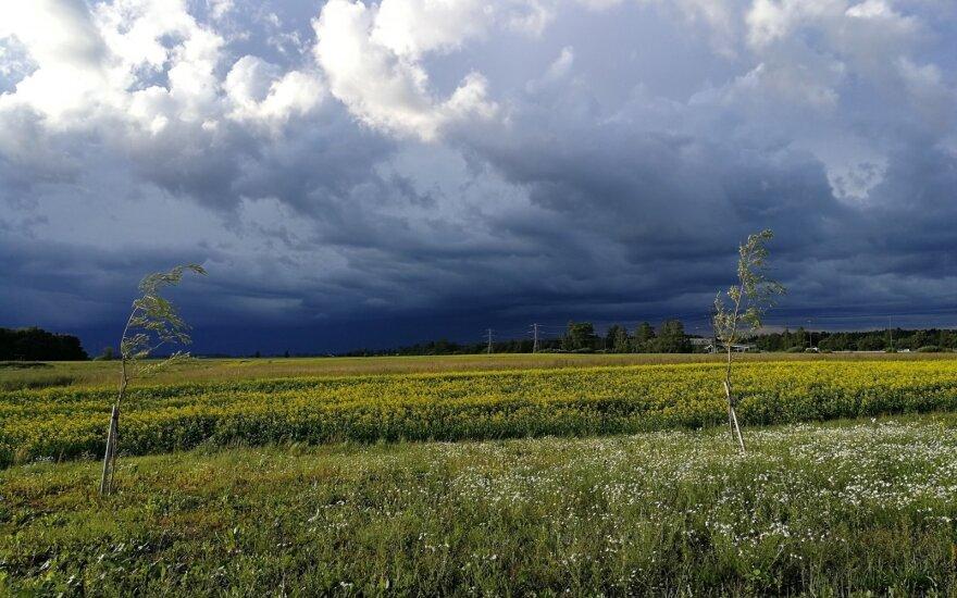 Пострадавшие от ливней литовские фермеры получат 9 млн. евро финансовой помощи ЕС