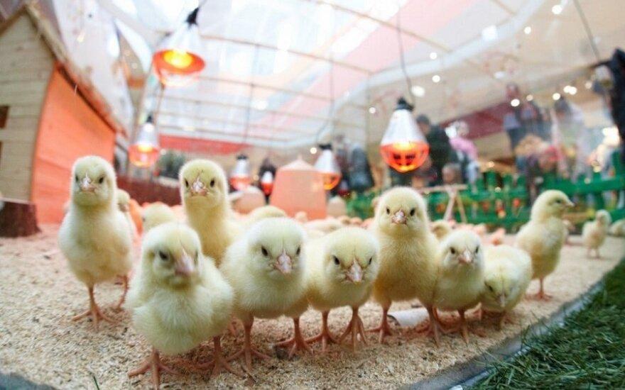 Średnio 363 zł wyda polska rodzina na Święta Wielkanocne
