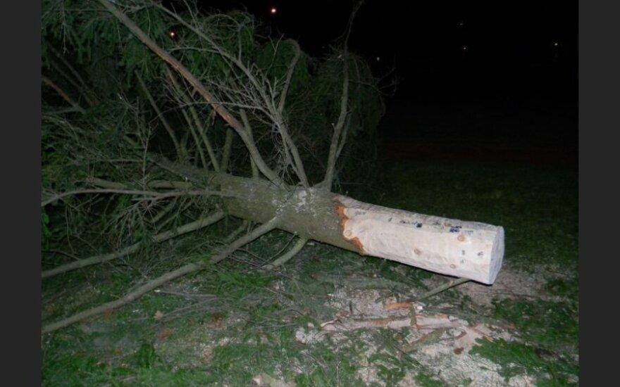 В Эстонии упала еще одна рождественская елка