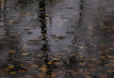 Lietus, bala, vanduo, dargana