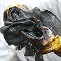 Kareivis valosi naftuotas rankas