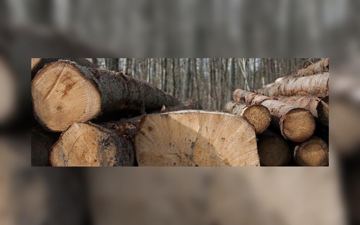 medienos vilkų prekybos galimybės