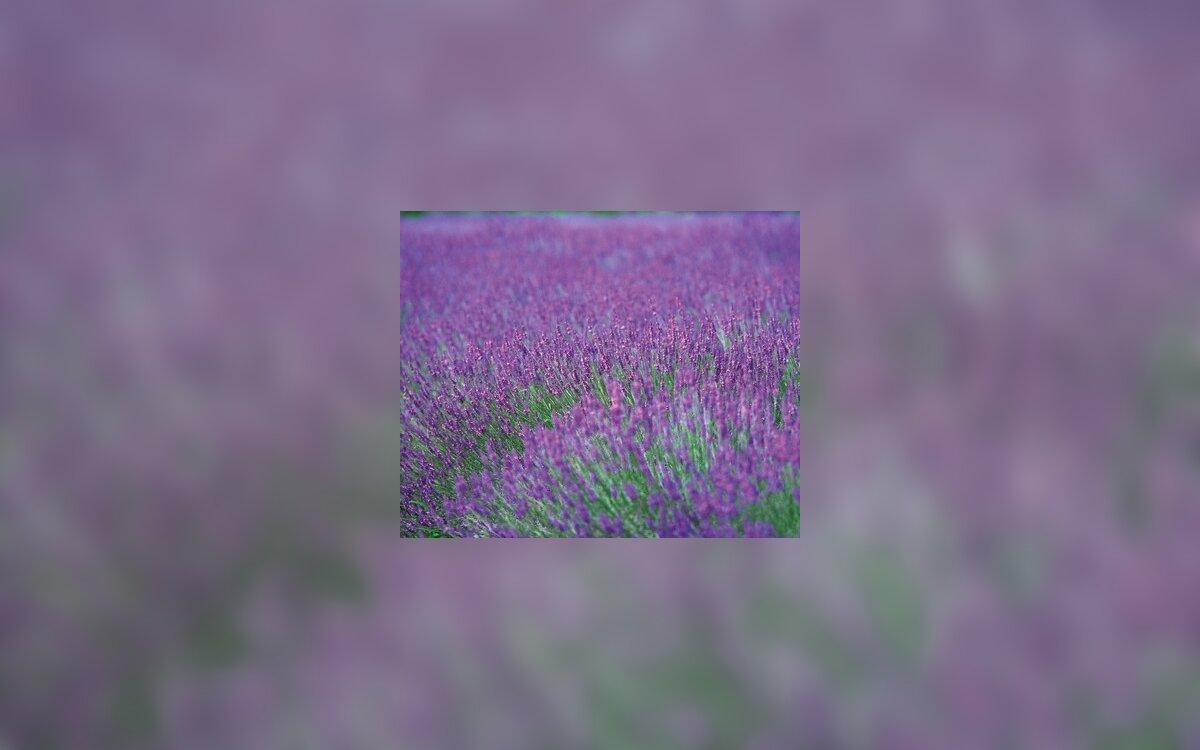 Aukšto slėgio žolės: viršų 5 apžvalga