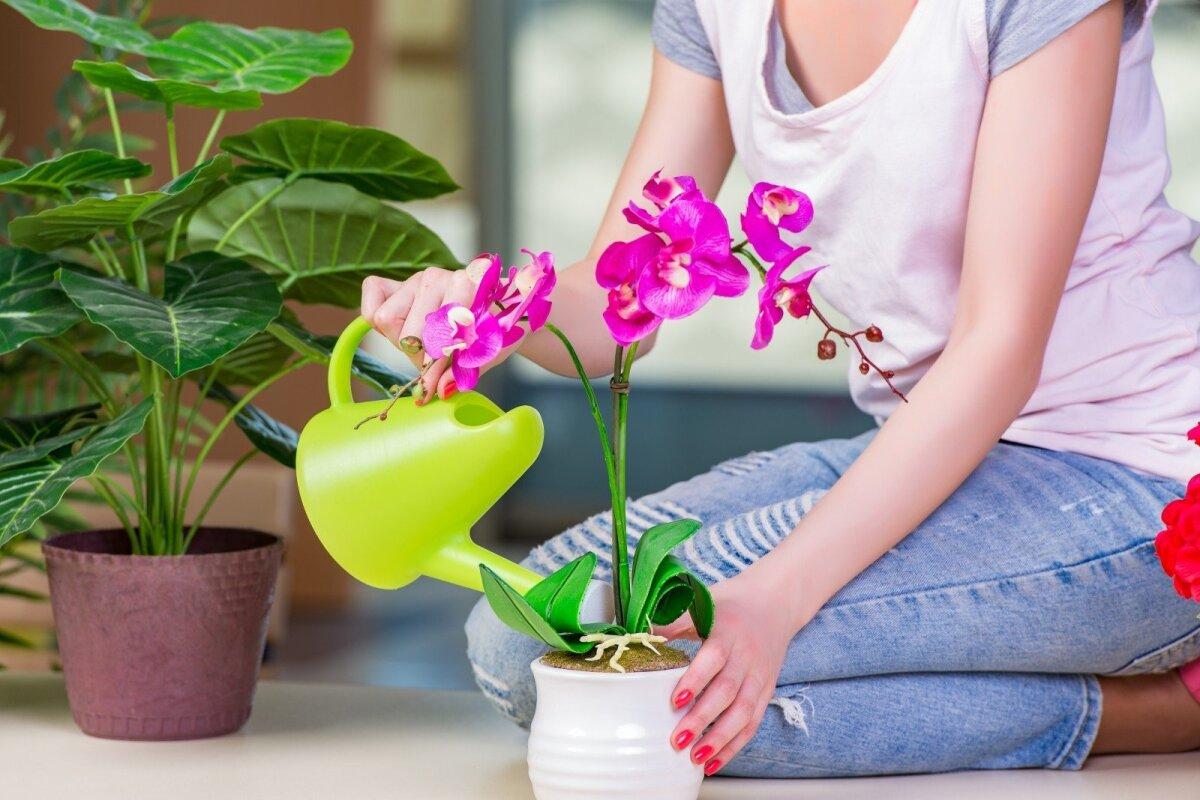 Amžina kambarinių gėlių augintojų dilema: laistyti po mažiau ir ...