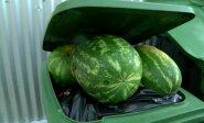 Vieni badauja, kiti švaisto: kaip nesunkiai sumažinti maisto atliekų skaičių?