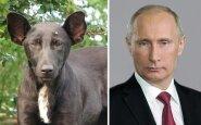 15 gyvūnų, kurie atrodo lygiai taip pat kaip įžymūs žmonės