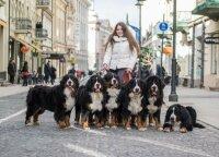 Šunų vedlė Goda neįsivaizduoja gyvenimo be keturkojų: neiškeisčiau jų į nieką