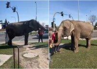 Kauniečius nustebino vaizdas miesto gatvėse: išsivedė pasivaikščioti dramblį