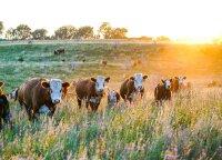 Nederlingose žemėse pasirinko ekologišką ūkininkavimą – kiek į žemę bedėtum, naudos daugiau nebus