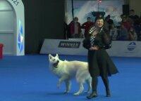 Rusai sukosi šokio ritmu su savo keturkojais