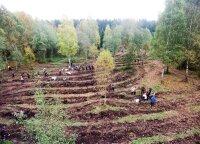 Kaip auga miškas ir kodėl kartais miškui reikia padėti užaugti