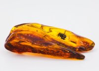 Unique amber with prehistoric insects will be auctioned