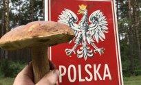 Grybavimas Lenkijoje