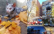 Neįtikėtinas Vilniaus ugniagesių jautrumas: vyrai gaivino iš liepsnų išgelbėtą katinėlį!
