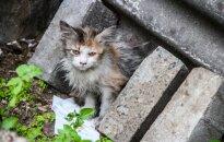 Švitrigailos gatvės rūsiuose miršta kačiukai: išlikusiai Vytei ieškoma pagalbos